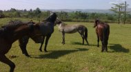 Horse Riding in Uganda
